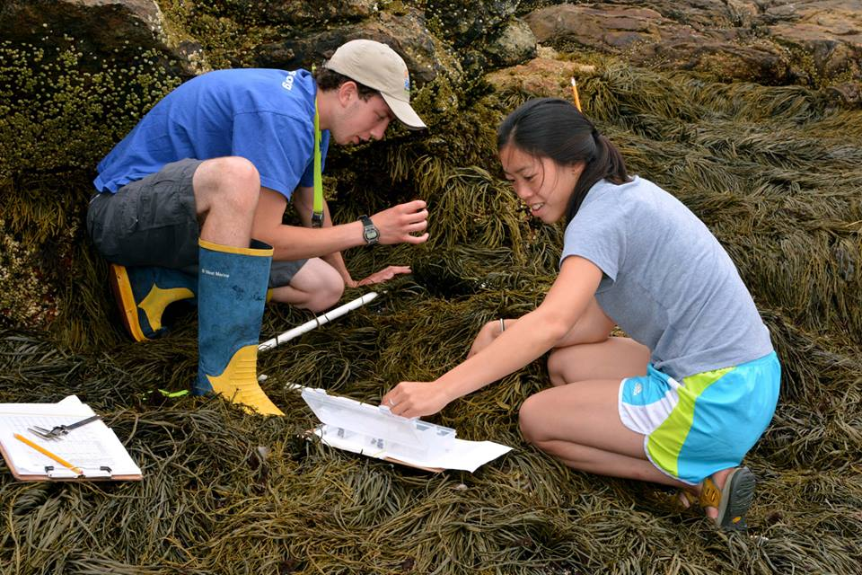 Photo of Intertidal Interns at a transect site