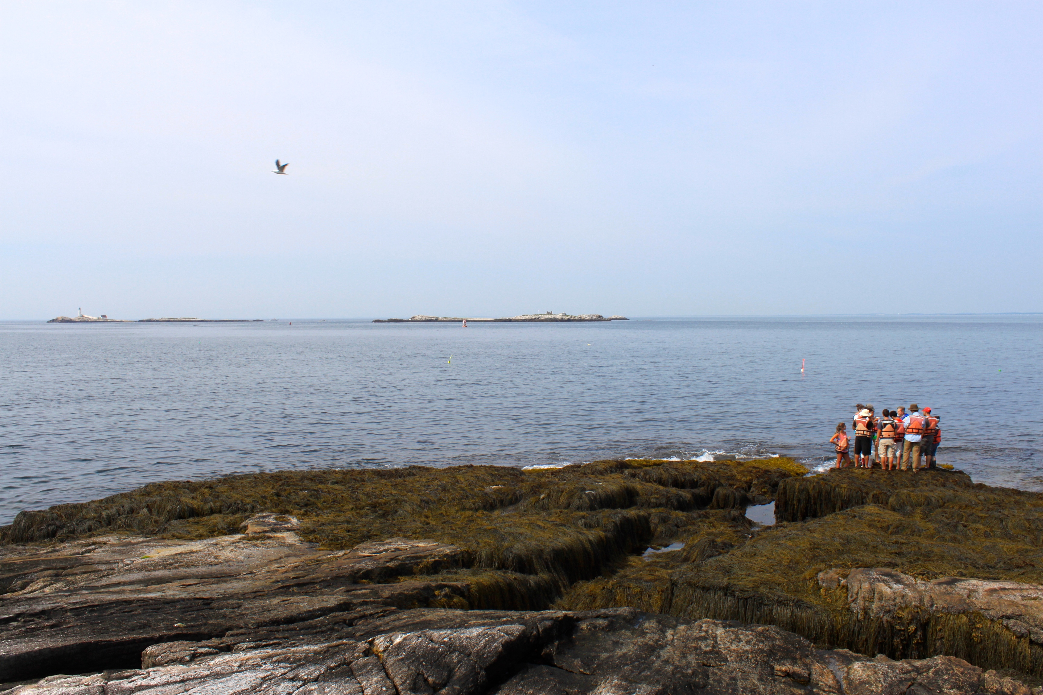 Photo of a group of students in the intertidal zone down by the water's edge