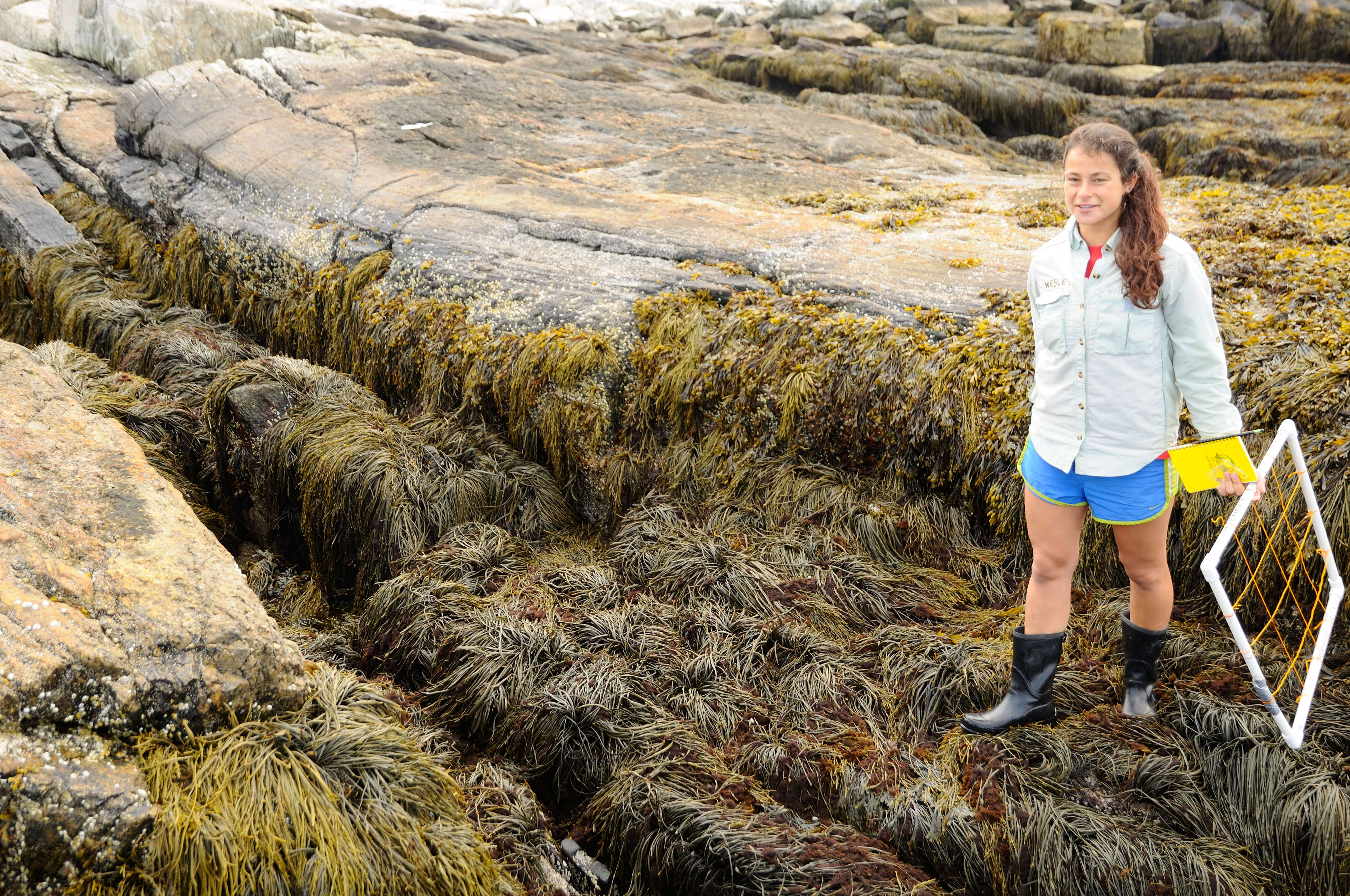 Photo of a student in the intertidal zone with a transect quadrat