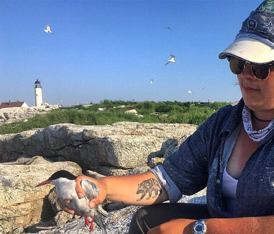 Photo of SML Seabird Technician, Taylor Ouellette, holding a tern