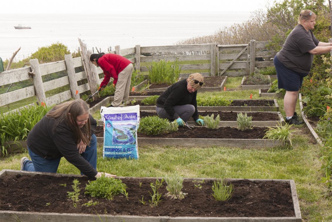 Volunteer Weekend 2015 Gardeners