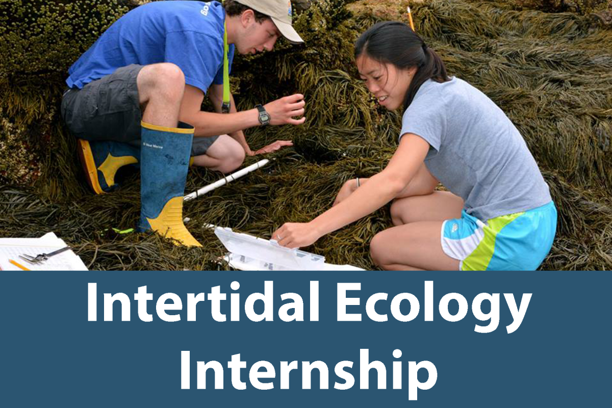 Click on this button to learn more about the Intertidal Ecology Internship