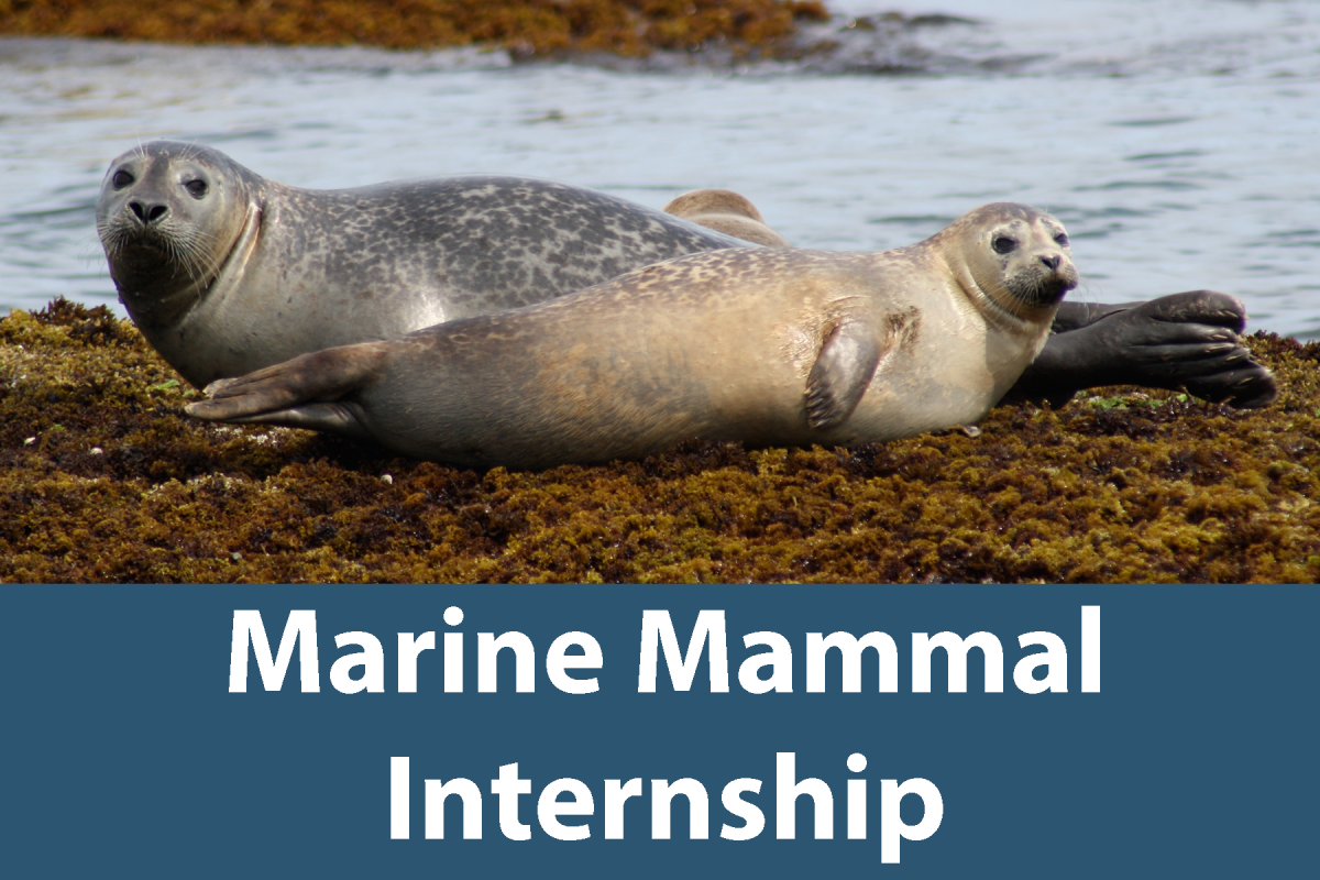 Click on this button to learn more about the Marine Mammal Internship