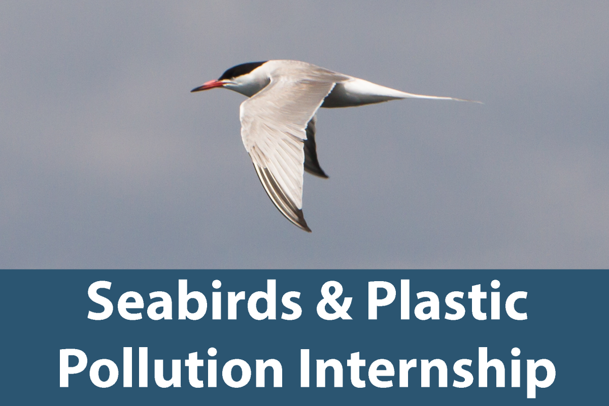Click on this button for more information about the Seabirds and Plastic Pollution Internship