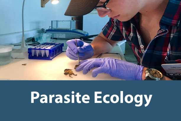Click on this button to learn more about the Parasite Ecology Internship