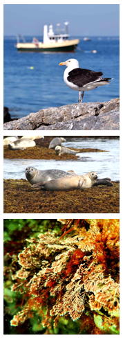 Seabirds, Seals, Seaweed