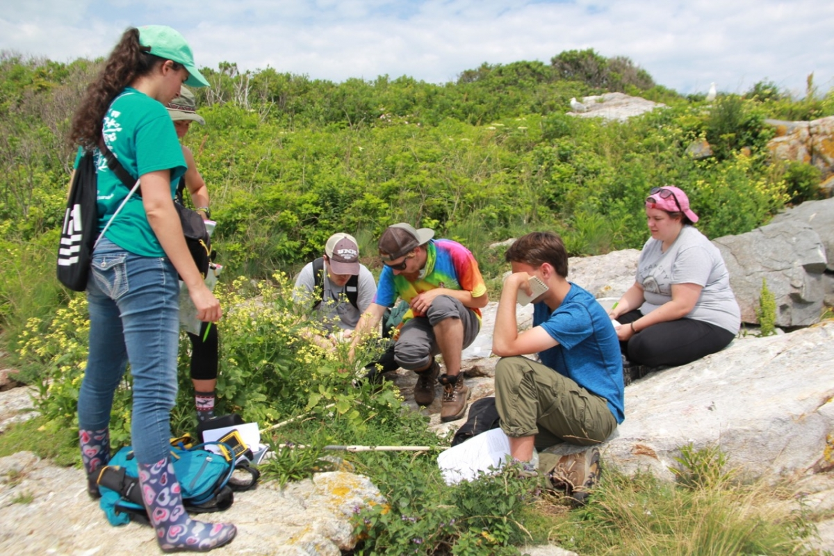 photo of Coastal Habitat Field Research methods students at a site on Appledore Island