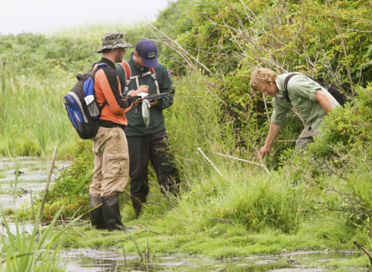 photo of Coastal Habitat Field Research Methods students in the field