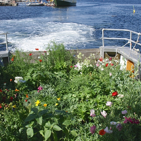 Boat full of flowers by J. Cerny